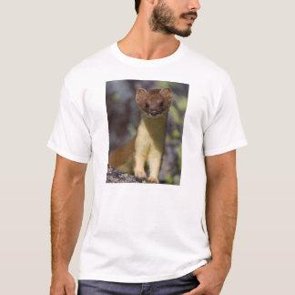 Camiseta Doninhas de cauda longa