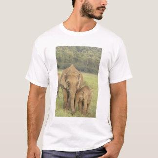 Camiseta Elefante indiano/asiático e jovens um, Corbett