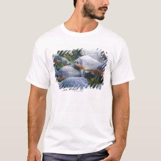 Camiseta Escola dos Piranhas (nattereri de Pygocentrus)
