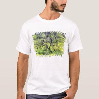 Camiseta EUA, Califórnia, San Diego. Uma floresta queimada