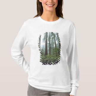 Camiseta EUA, Califórnia, sequóia vermelha NP. A névoa