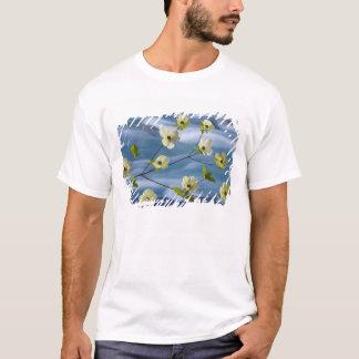 Camiseta EUA, Washington, canal da capa. Dogwood pacífico