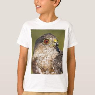 Camiseta falcão Afiado-shinned