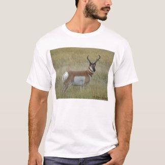 Camiseta Fanfarrão do antílope de A0001 Pronghorn