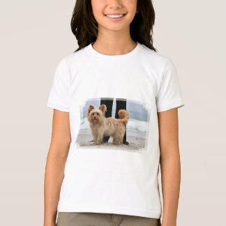 Camiseta Farris - Lucy - raça misturada