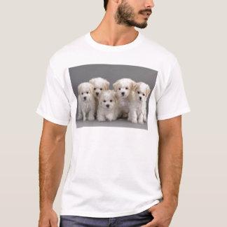 Camiseta Filhotes de cachorro de Bichon Frisé