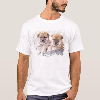 Camiseta Filhotes de cachorro de Shiba Inu na cuba de