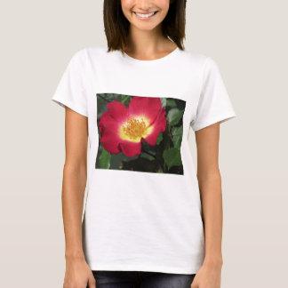 Camiseta Flor da rosa vermelha com estames amarelos