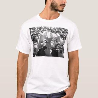 Camiseta Flores brancas do cyclamen de Backlits no fundo