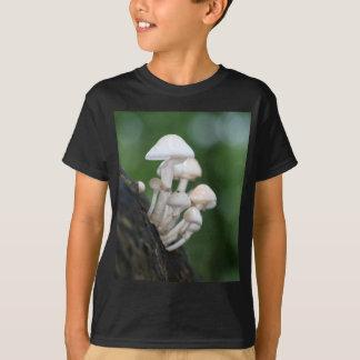 Camiseta Fungo da porcelana, mucida de Oudemansiella