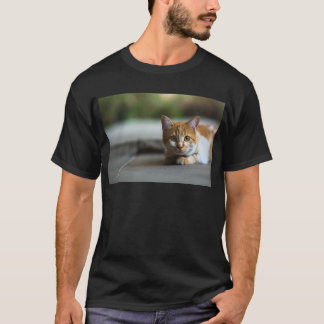 Camiseta Gatinho alaranjado do gato malhado