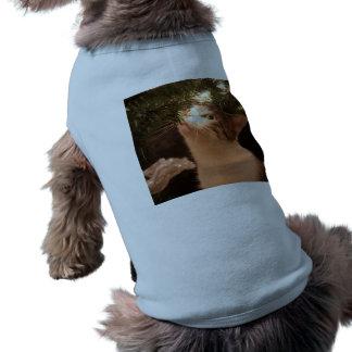 Camiseta Gatos e luzes - gato do Natal - árvore de Natal