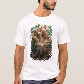 Camiseta Gengibre