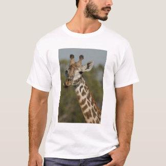 Camiseta Girafa do Masai, camelopardalis do Giraffa