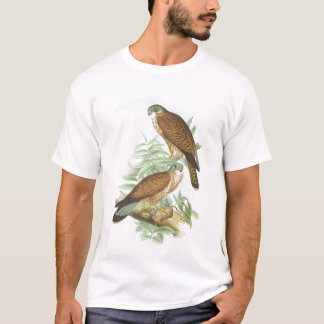 Camiseta Gould - Kestrel - tinnunculus de Falco
