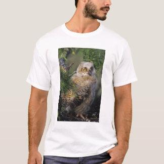 Camiseta Grande coruja Horned, virginianus do bubão, novo