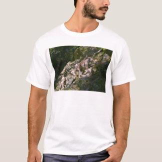 Camiseta Íbex alpino na montanha