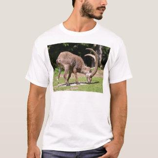 Camiseta Íbex alpino que pasta