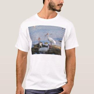 Camiseta Íbis 3 na costa da baía de Florida