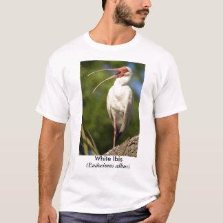 Camiseta Íbis brancos, (Eudocimus…