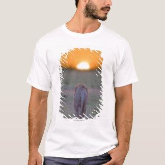 Camiseta Kenya, Masai Mara