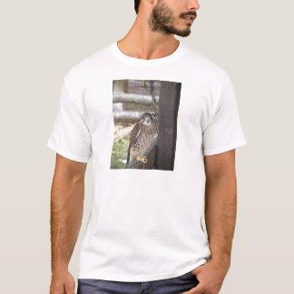 Camiseta Kestrel empoleirado em um cargo da cerca