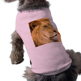 Camiseta Leão grande que olha longe