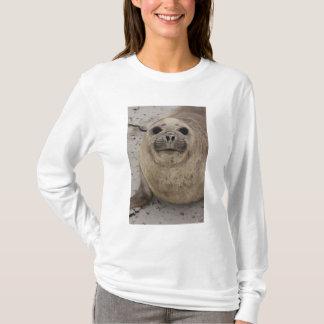 Camiseta Leonina do sul do Mirounga do selo de elefante)