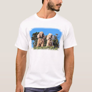 Camiseta Lixívia - caniches - Romeo Remy
