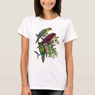 Camiseta Lories e lorikeets