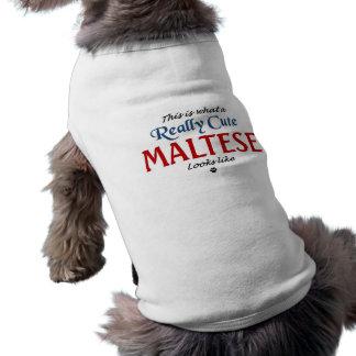 Camiseta Maltês bonito