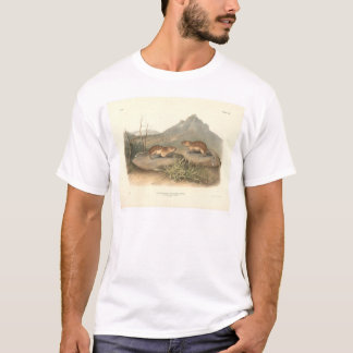 Camiseta Marmota de Califórnia por Audubon (0184A)