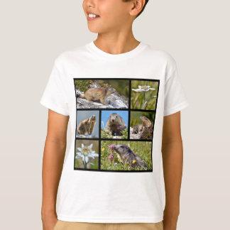 Camiseta Marmota e edelweiss alpinos do mosaico das fotos