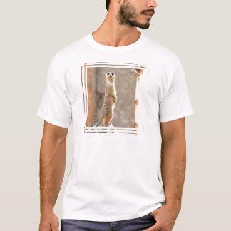 Camiseta Meerkat no t-shirt dos homens da atenção