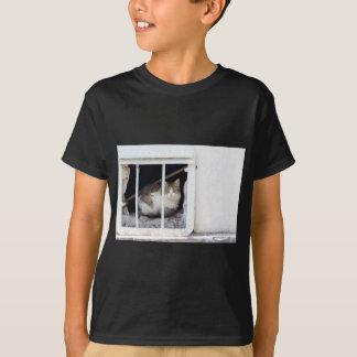 Camiseta O gato desabrigado observa a rua