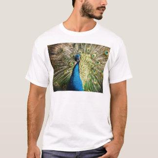 Camiseta O pavão bonito