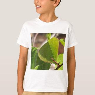 Camiseta orvalho da manhã na folha chinesa do sebo
