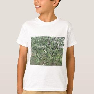 Camiseta Os ramos de oliveira com primeiros brotam