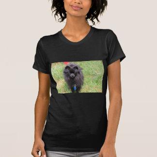 Camiseta Pablo o Pomeranian