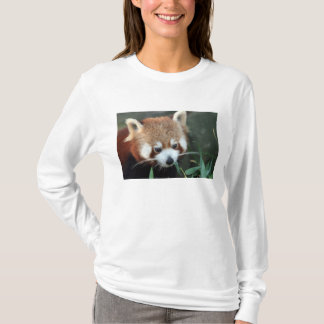 Camiseta Panda vermelha, jardim zoológico de Taronga,
