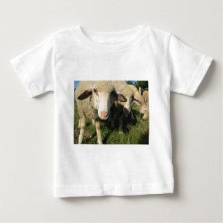Camiseta Para Bebê Carneiros curiosos