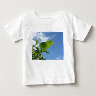 Camiseta Para Bebê Close up da folha da noz iluminado pela luz solar