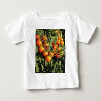 Camiseta Para Bebê Plantas de tomate que crescem no jardim