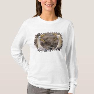 Camiseta Pares acenados do irrorata de Phoebastria do