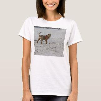 Camiseta pei shar na praia
