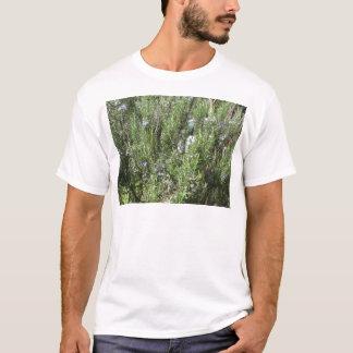 Camiseta Planta de Rosemary com flores. Toscânia, Italia