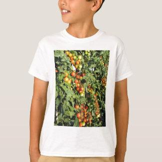 Camiseta Plantas de tomate que crescem no jardim