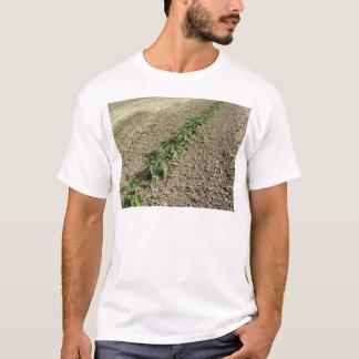 Camiseta Plantas frescas da manjericão que crescem no campo