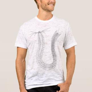 Camiseta Platynereis Atoke