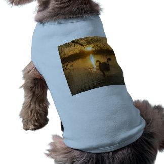 Camiseta Por do sol com cisne